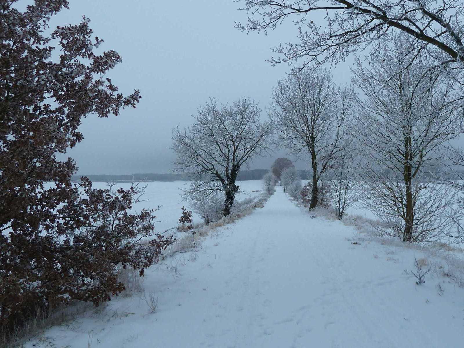 Tiergartenweg